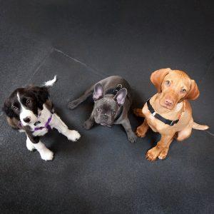 Ahimsa Dog Training Seattle