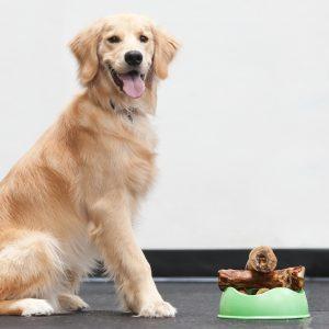 Seattle Dog Aggression Training Classes